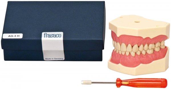 Dentalhygiene-Modell - Stück Modell OK + UK, Zahnfleischauflagen, Zähne, AG-3 H von Frasaco
