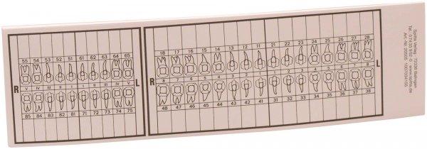 Zahnschema groß - Block 25 Blatt von Spitta Verlag
